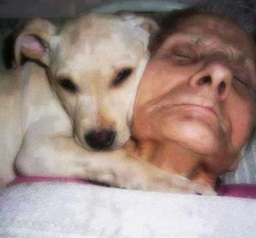 собака выражает чувства к ребенку с синдромом дауна человечность собаки никого не оставит равнодушным